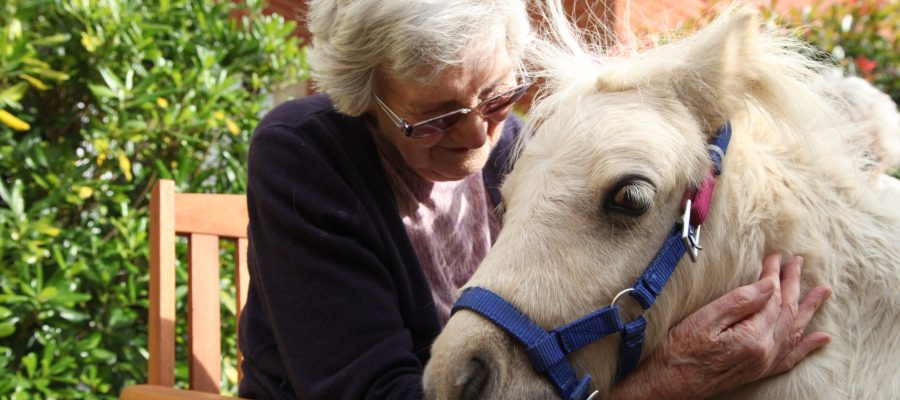A care home resident interacts with a Shetland pony during a visit to an Encore Care Home